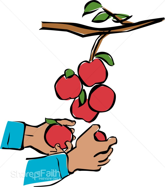 Hands Harvesting Apples