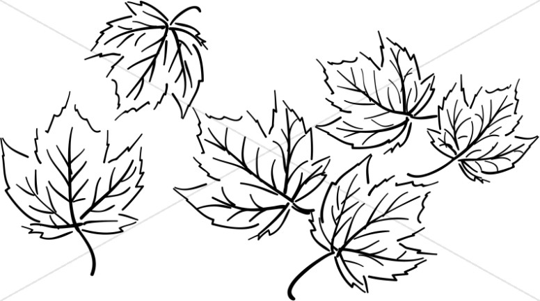 Black and White Maple Leaf Cluster