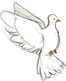 Flying Dove Sketch