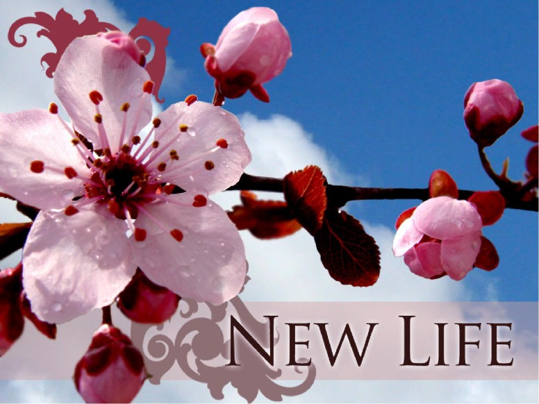 New Life with Blossoms