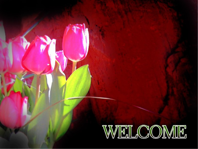 Tulips with Welcome