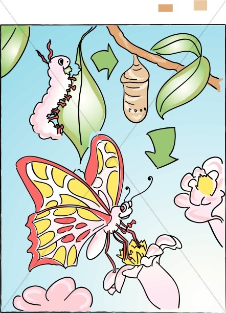 Caterpillar To Butterfly in Color