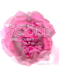 Rose with Rejoice and Isaiah Verse