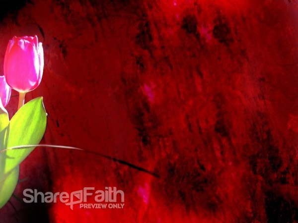 Pink Rose on Red Photo Background
