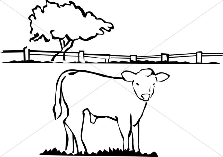 Fatted Calf in Black and White