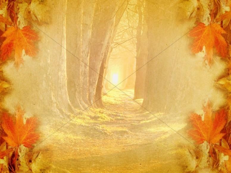 Wooded Path Worship Background