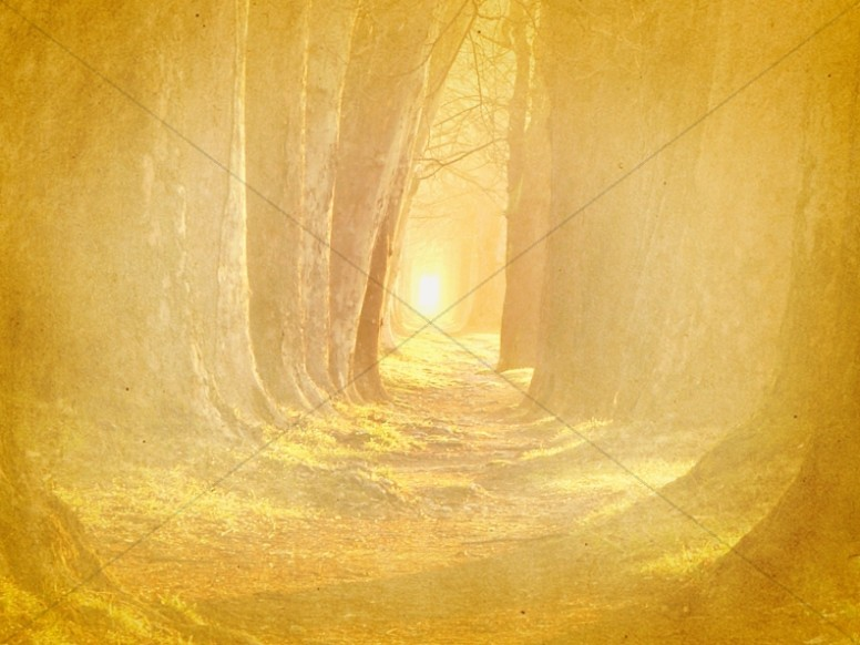 Forest Path Worship Background