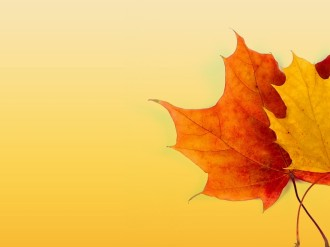 Fall Color Background Image