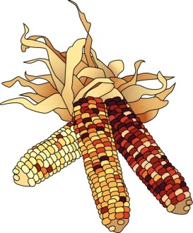 Dried Corn Colorful Clipart