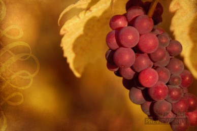 Christian Motion Background With Grapes