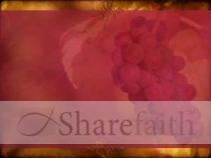 Grape Harvest Background Slide