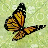 Butterfly Email Image
