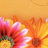 Mothers Day Daisies Email Image
