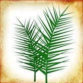 Palm Sunday Branches Email Image