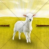 Passover Lamb Email Image