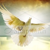 Pentecost Dove Email Image