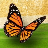 Monarch Butterfly Email Image