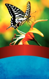 Butterfly Bulletin Cover