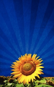 Sunflower Bulletin Cover