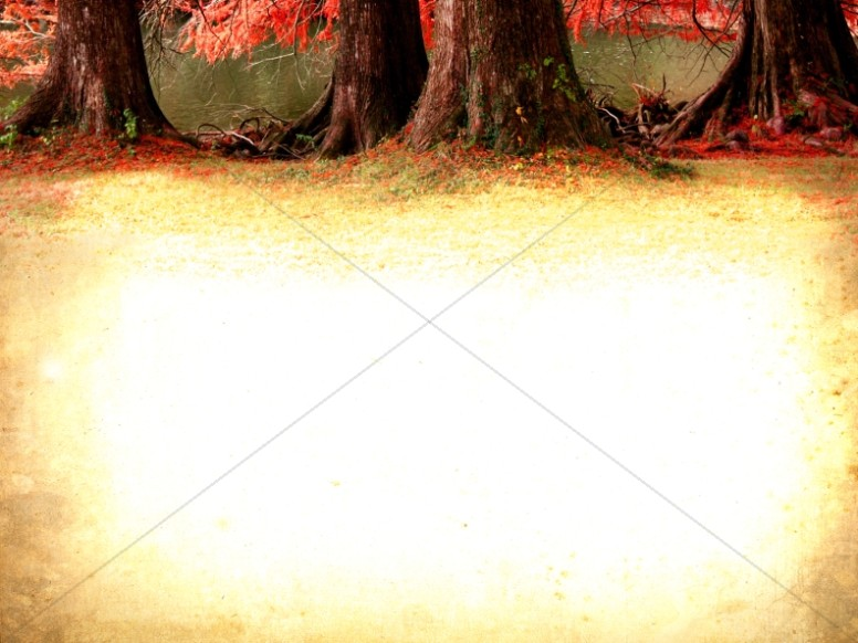 Pictures of Trees Worship Background
