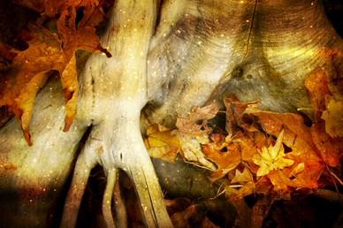 Thanksgiving Fall Photo Worship Video