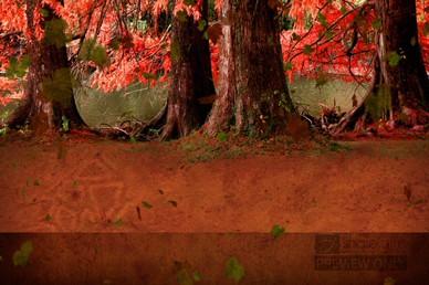 Fall Trees Worship Video Loop