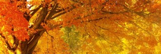 Fall Website Banner