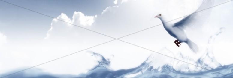 Dove Website Banner