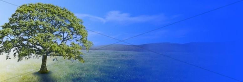 Tree Website Banner