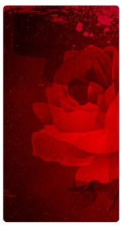 Rose Banner Widget