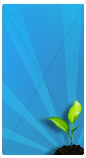 Seedling Banner Widget