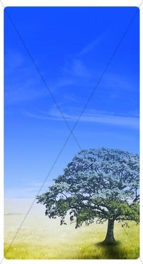 Tree Banner Widget