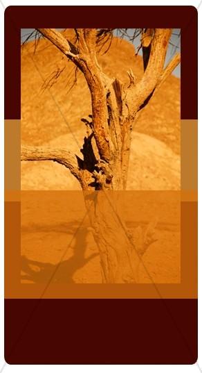 Desert Tree Banner Widget