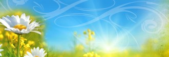 Flowers in Field Website Banner
