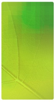 Fresh Leaf Banner Widget