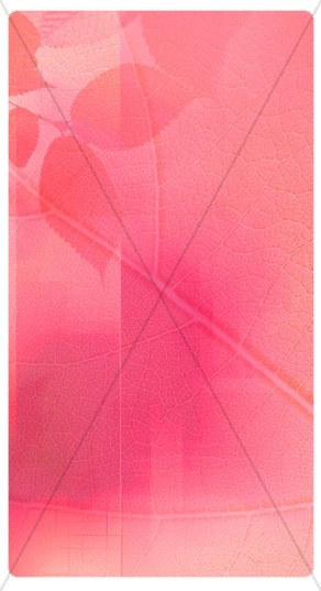 Pink Leaf Banner Widget