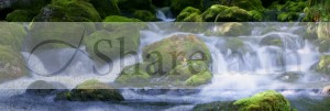 River Website Banner