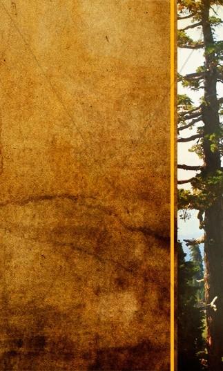 Forest Tree Banner Widget