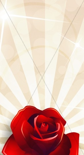 Red Rose Banner Widget
