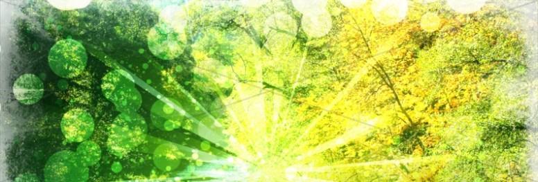 Spring Light Website Banner