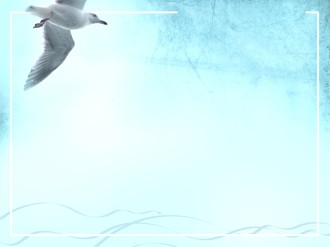 Seagull Worship Background