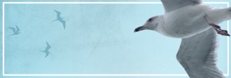 Seagull Website Banner