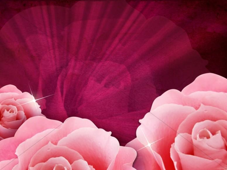 Pink Roses Worship Background