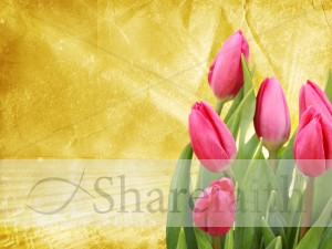 Tulip Worship Background