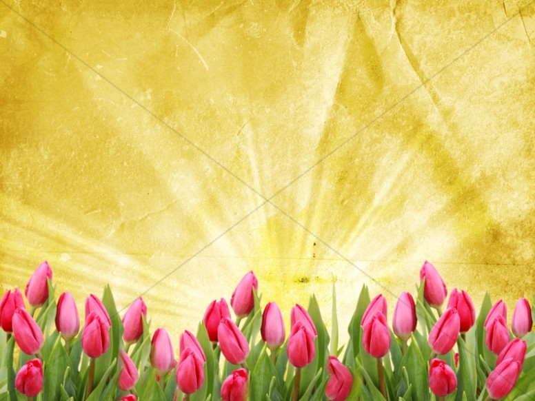 Tulip Background Template