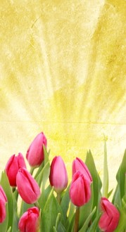Tulips Website Sidebar