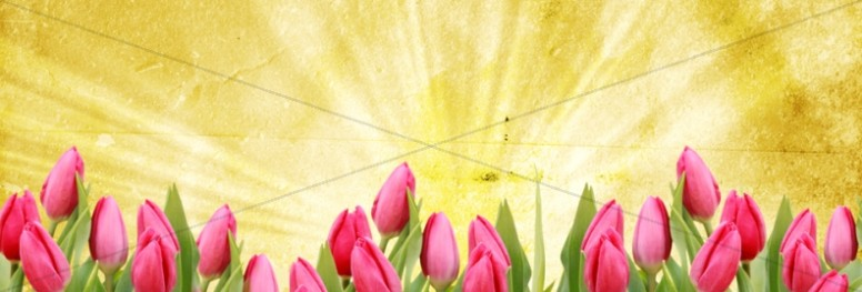 Tulip Website Banner Template