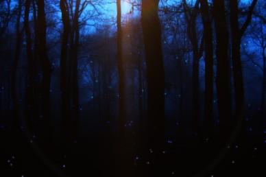 Firefly Worship Video