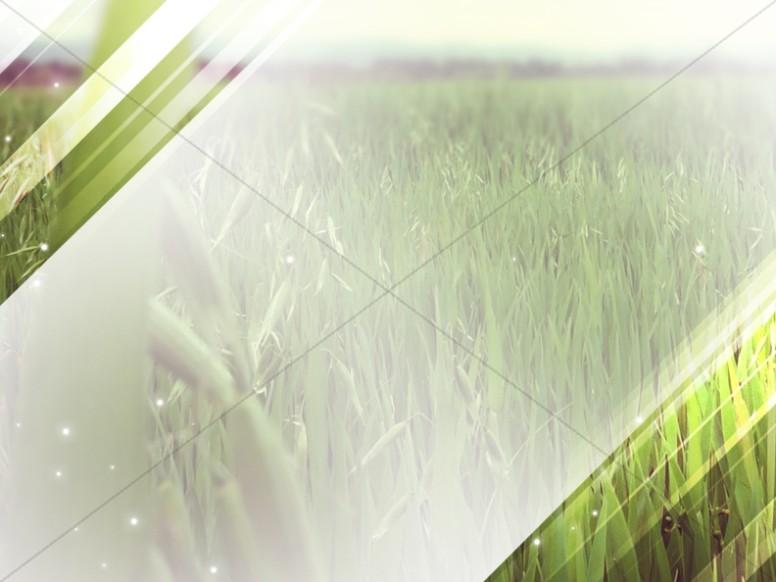 Grassy Field Worship Background