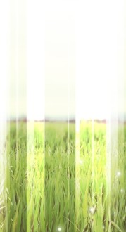 Field of Grass Website Sidebar